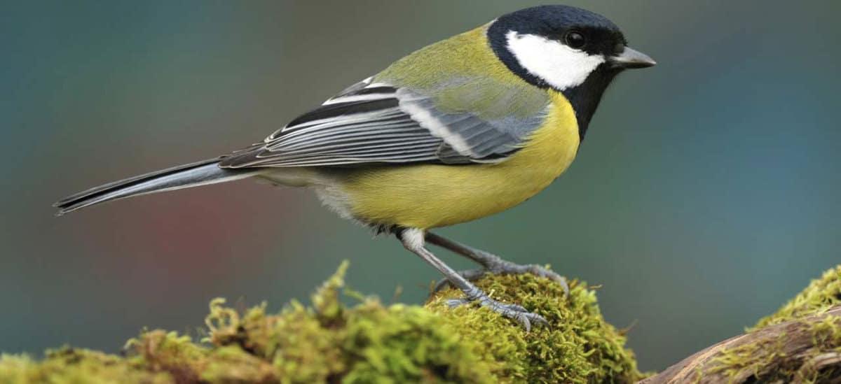 10 Dinge, die Sie tun können, um Vögeln am Gartenhaus zu helfen
