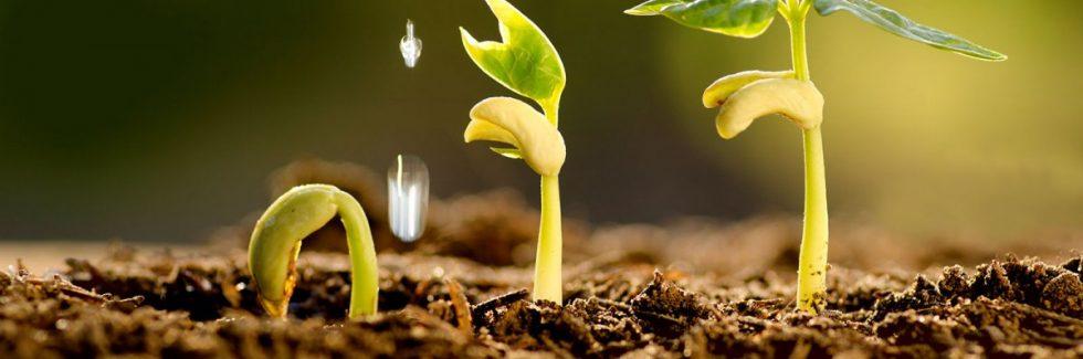 Samenproduktion am Gartenhaus