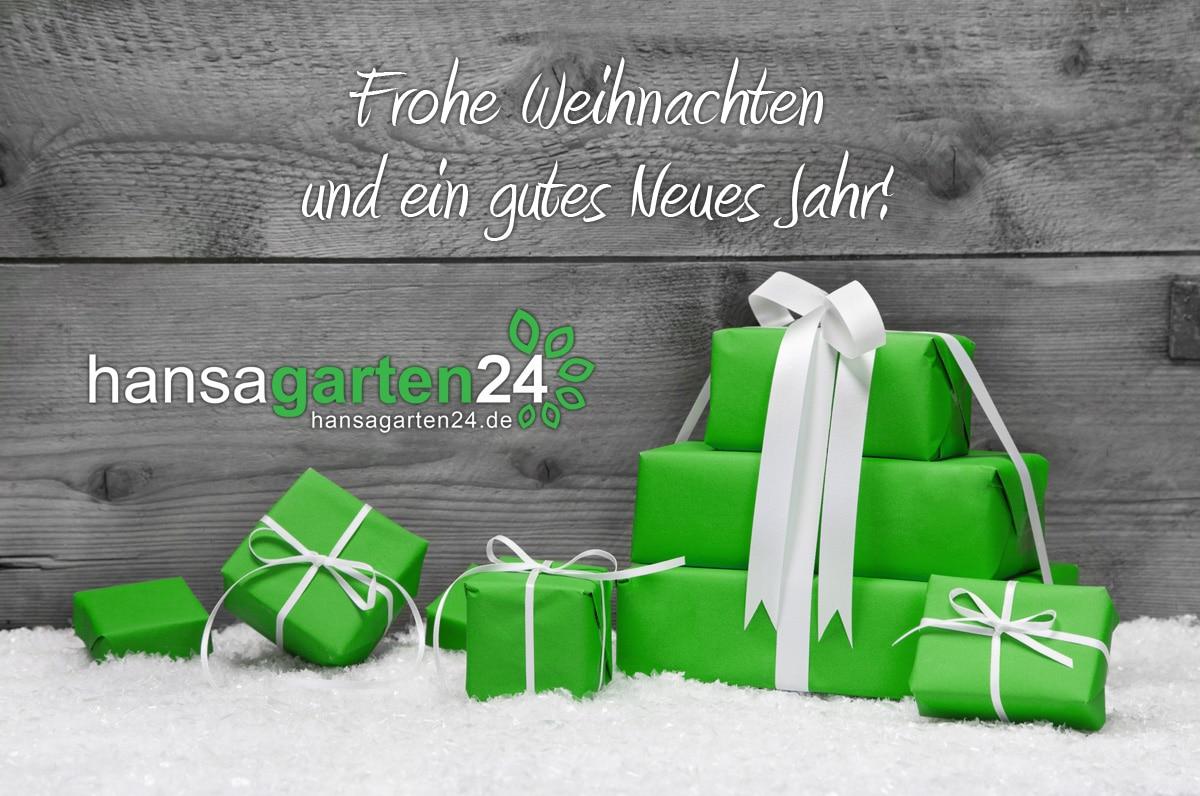 frohe weihnachten und ein gutes neues jahr hansagarten24. Black Bedroom Furniture Sets. Home Design Ideas