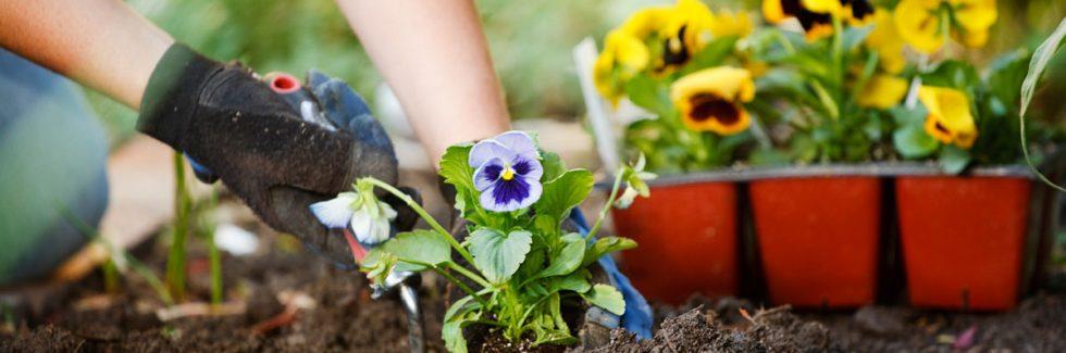 Frühe Gartenarbeiten im und um das Gartenhaus herum