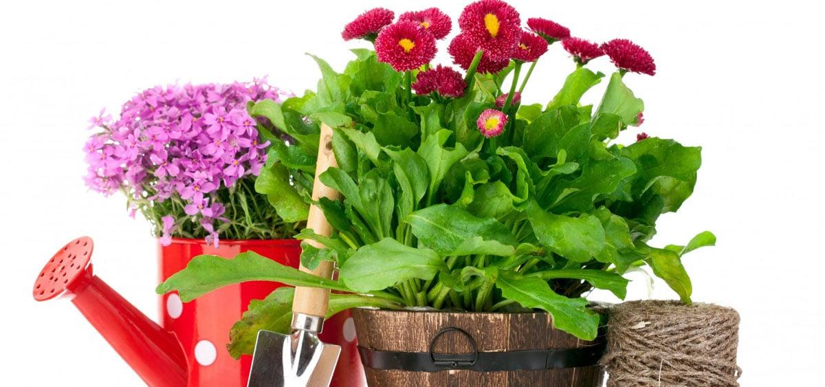 Essbare Blumen an der Gartenhütte