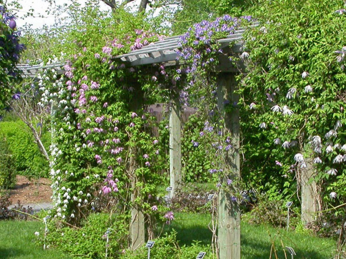 Der Garten Am Blockbohlenhaus Kletterpflanzen Als