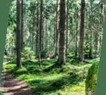 Alle Holzhaus-Komponenten bestehen aus sorgfältig ausgewählter, langsam gewachsener, dichter nordischer Fichte